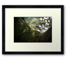 North Side – Acadia National Park, Maine Framed Print