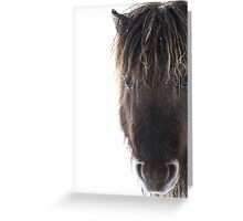Shetland pony with ice in mane Greeting Card