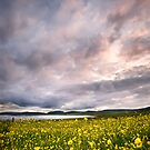 Fields of Gold by John Dewar