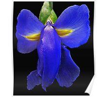 Elephant Iris Poster