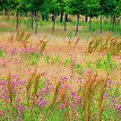 Summer Fields by Brian Gaynor
