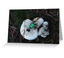 Large white fungus Greeting Card