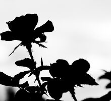 Black Rose by Peyton Duncan