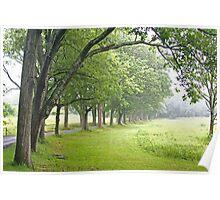 oak allee Poster