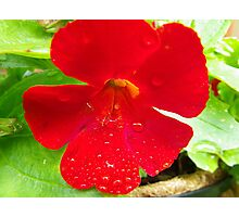 Water droplets on flower Photographic Print