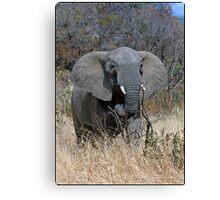 Annoyed Female Elephant Canvas Print