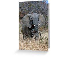 Annoyed Female Elephant Greeting Card