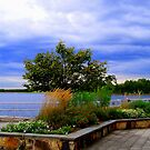View  Manasquan Reservoir   by fiat777