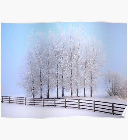 Frozen Poplar Trees II, Northern Ireland Poster