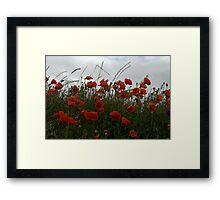 Corn Poppies Framed Print