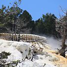 Mammoth Hot Springs....Yellowstone National Park... by EvaMarie Cannon
