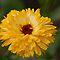 3rd of September - Yellow Flowers