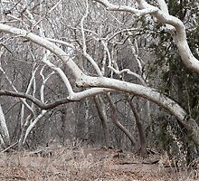 White Trees by Eileen McVey