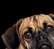 The power of the puggle. by violet777