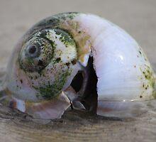 Shell in low tide by Bixie