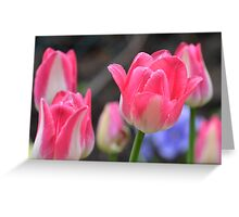 Tulips in the park Greeting Card