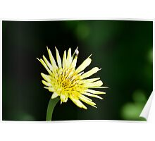 Yellow wild flower (with a fly) Poster