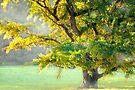 The misty tree by Delfino