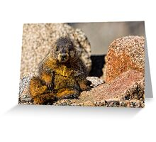 Take A Load Off Greeting Card
