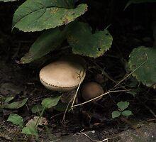 Mushroom by Paul Gloor
