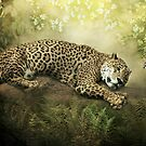 The Jaguar and the Peacock........ by polly470