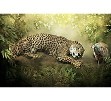 The Jaguar and the Peacock........ Photographic Print