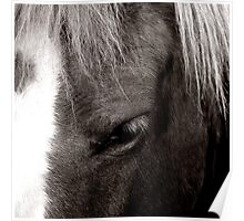 _ horse_ Poster
