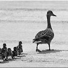 Duck Walk by Chet  King