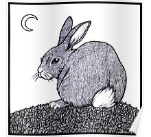 Cotton Tail Poster