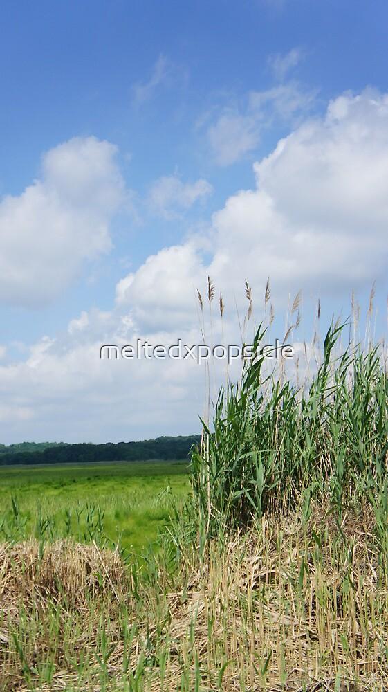 Grassy Field by Jessica Liatys
