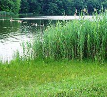 Tall Grass by Jessica Liatys