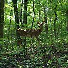 Deer by Jessica Liatys