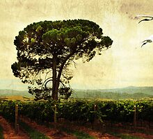 Over the Vines by Margi