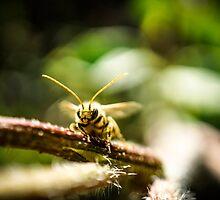 Wasp by DesignUnion