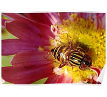 bee resting on flower Poster