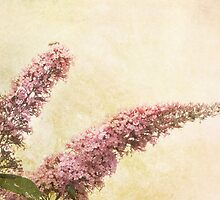 Butterfly Bush by Margi