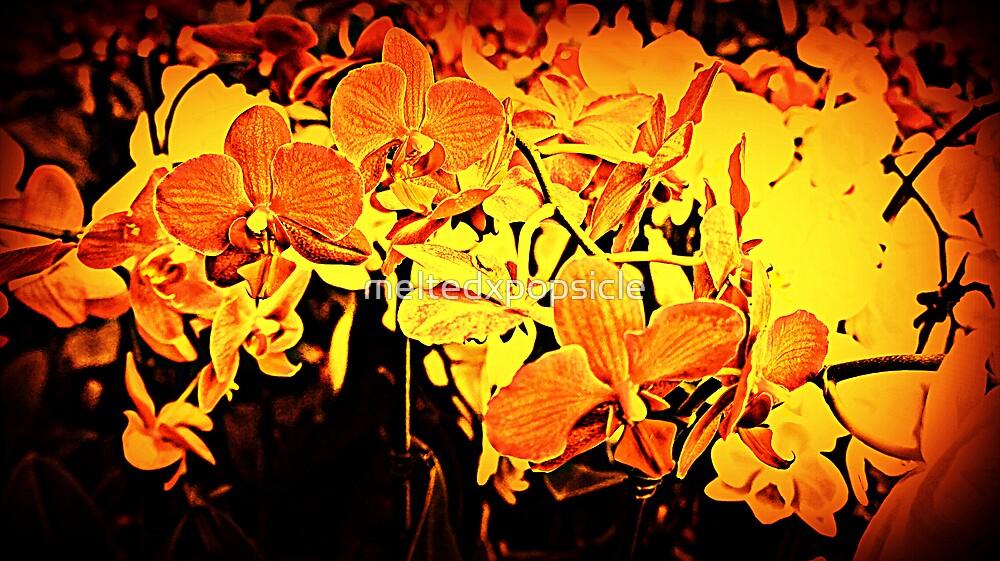 Firey Flowers by Jessica Liatys