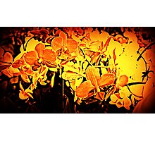 Firey Flowers Photographic Print