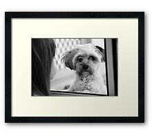 Oh please just let me in!  Framed Print