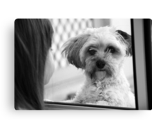 Oh please just let me in!  Canvas Print