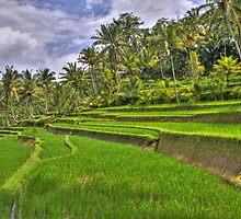 Gunung Kawi Rice Paddies by Ryan Pedlow