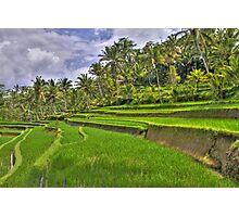 Gunung Kawi Rice Paddies Photographic Print