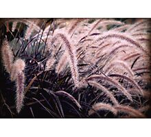Feathery Tales Photographic Print