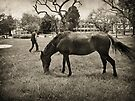 Man and Horse by Maria  Gonzalez