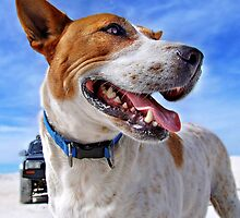 Australian Cattle Dog On Beach by sallydexter