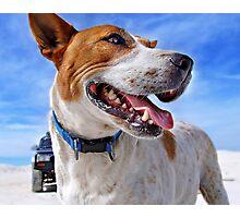 Australian Cattle Dog On Beach Photographic Print
