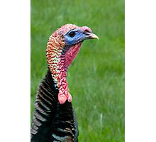 What A Turkey!!! Photographic Print