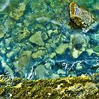 Moss and Stones by Ravi Chandra