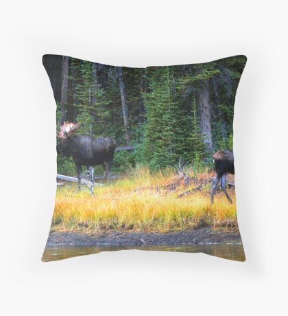 BULL AND COW MOOSE Throw Pillow