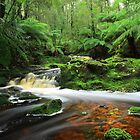 The Hebe River at Milabeena in nor west Tasmania , Australia by phillip wise